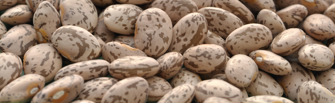 Researchers Find Pinto Beans Help Lower Cholesterol