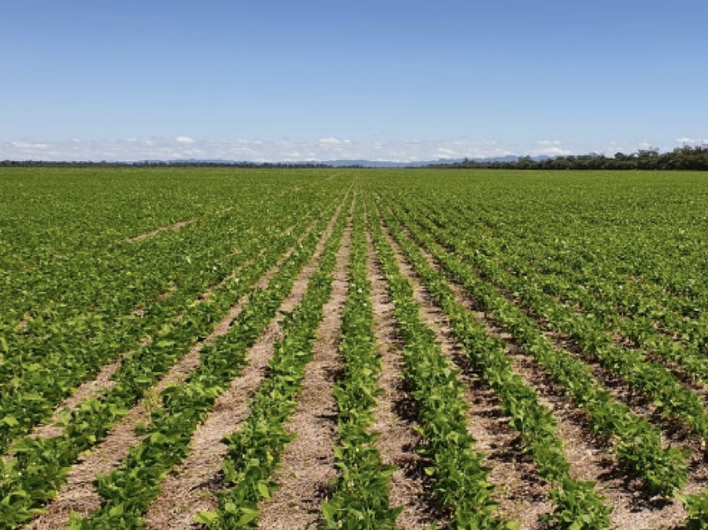 A Look at Argentina's 2019 Dry Bean Crop