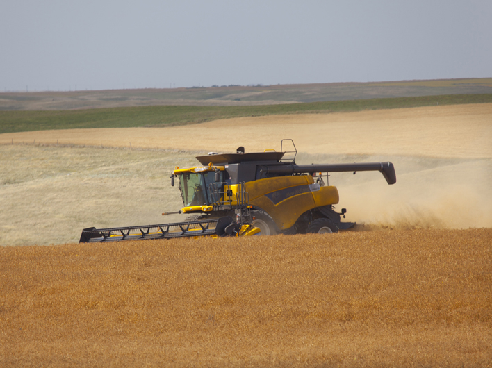 Update on U.S. Pulse Crops: Northern Plains