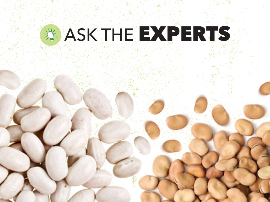 White and Faba Bean Global Outlook