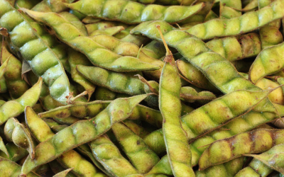 India Import Ban on Tanzania Pigeon Peas: When a Winner Loses All