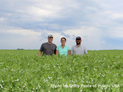 An Update on North America's Pea, Lentil and Chickpea Crops