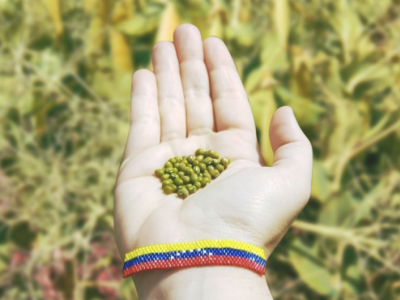 Mung Beans from Venezuela: An Interview with Ramón Enrique Alvarado Gimenez and Vanessa Tejero Leon