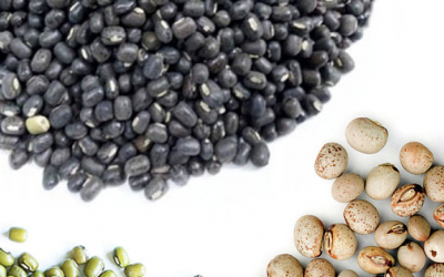 Black Matpe, Pigeon Pea & Mung Beans Global Outlook at Pulses 2.0