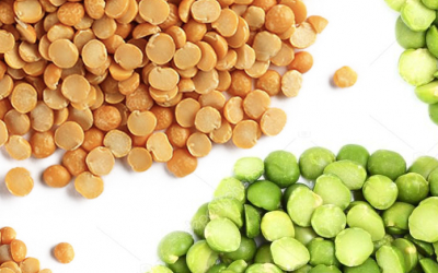 Dry Peas Global Outlook at Pulses 2.0