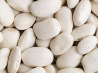 White Beans Global Outlook at Pulses 2.0