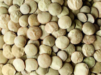 Green Lentils Global Outlook at Pulses 2.0