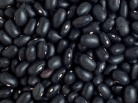 Black Beans Global Outlook at Pulses 2.0