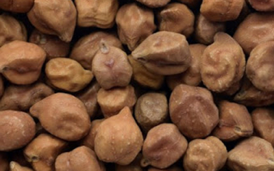 Weekly Update on India's Chana Market (Oct. 19 – Oct. 24)