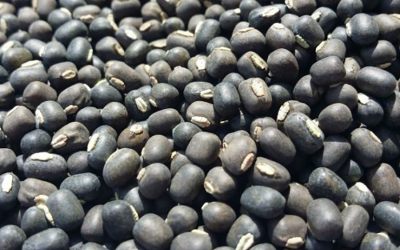Weekly Update on India's Urad Market (Nov 16 - 21)