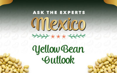 GPC Ask the Experts Mexico: Yellow Bean Outlook