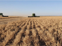 Argentina's 2020 Winter Pulse Crop Harvest